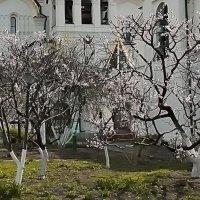 В монастырском саду :: Nikolay Monahov