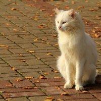 Кошачье величество... :: Юрий Моченов
