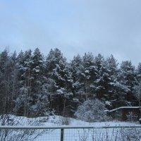 Лес.Зима. :: Sall Славик/оf