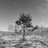 Одинокая :: Денис Некрасов