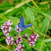 и снова бабочки 73 :: Александр Прокудин