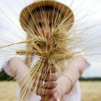 Букетик пшеницы) :: Яна Калтурова