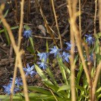 Весна... :: ТатьянА А...