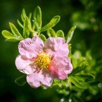 Цветок из волшебного сада. :: Alexandr Gunin