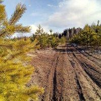 Новый лес в лугах :: Павел Михалев