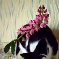 Люпин и кошка :: Марина Кушнарева