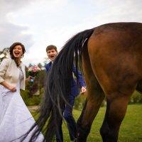 не весь конь :: Antonio Foraldo
