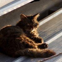 Соседский кот :: Rada