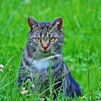 И глаза под цвет травы :: Людмила Торварт