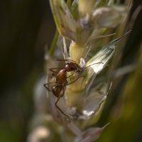 муравьишко :: Осень
