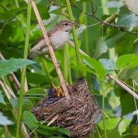 Гнездо в траве :: Андрей Кудрявцев