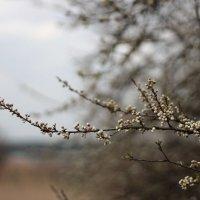 Осенняя весна :: Даниил Шадрин