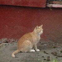 Уличная кошка. :: Зинаида