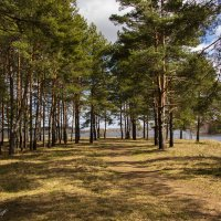 Хочется синего неба и зеленого леса... :: ТатьянА А...