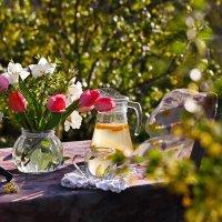 Посиделки в весеннем саду. :: Ольга Гукова (Olka-rada5)