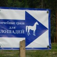 Лечебные грязи для лошадей. :: Александр Баринов