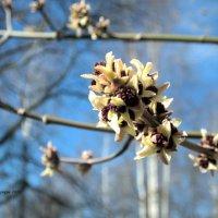 Сила весны :: Дмитрий Ерохин