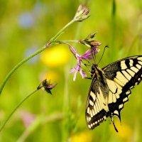и снова бабочки 155 :: Александр Прокудин