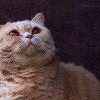 Портрет кошки :: Александр Протопопов