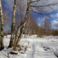 Белым снегом... :: Андрей Дурапов
