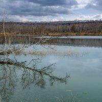 У озера в апреле :: Алексей Мезенцев