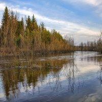 Весенний паводок :: Татьяна Афанасьева