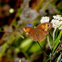 и снова бабочки 171 :: Александр Прокудин