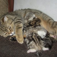 Кошачья семейство :: Нина Синица