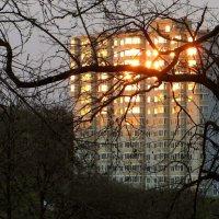 Из моего окна не виден закат, но видно его отражение - зарево в ветках акаций :: Татьяна Смоляниченко