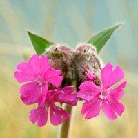 цветок :: Михаил Рублевский