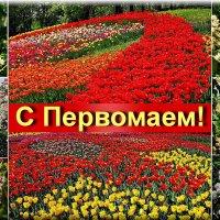 Цветущий и поющий яркий май! :: Petr Vinogradov