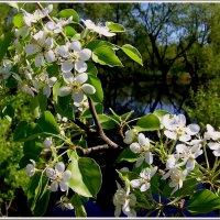 Зелёный май :: Геннадий Худолеев