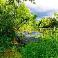 In forest :: Sergey Sergaj