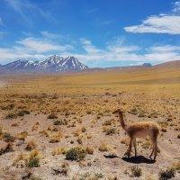 Наедине с природой... Боливия! :: Александр Вивчарик