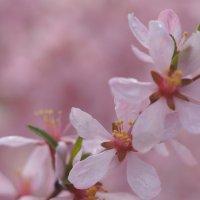 И всё таки весна :: Владилен Панченко