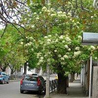 Весна в старом районе города :: Валентин Семчишин
