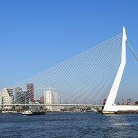 Мост Эразма.Роттердам :: Татьяна Ларионова