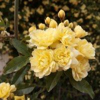 желтые цветы :: Giant Tao /