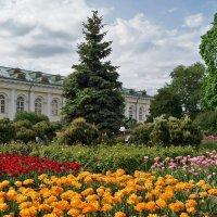 В Александровском саду :: Елена Кирьянова