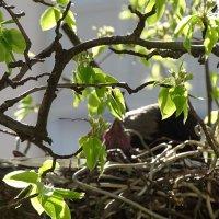 птенцы подрастают :: Sabina