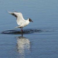 Идущая по воде... :: Юрий Моченов