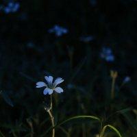 Цветки :: Юрий Гайворонский