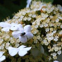 Летите, как мухи на мёд! :: Юрий Гайворонский