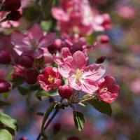 Всё цветёт :: Наталия Григорьева