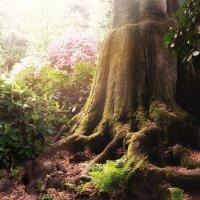 утро в лесу. :: Bonny .Ы.