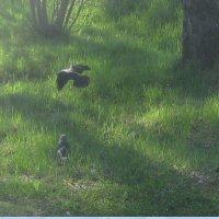 Птицы в тени дерева :: Maikl Smit