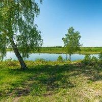 Березки на пруду :: Сергей Винтовкин