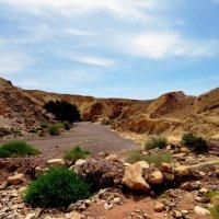 дорога в Красный Каньон (Израиль) :: Осень