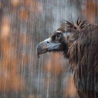 Осеннее настроение :: Sergey Bulkin