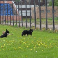 На стадионе только собаки. :: Люба